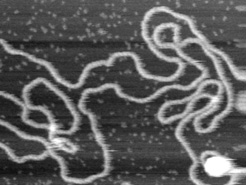 High-Resolution Imaging of double helix of DNA strand