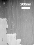 Observation of spreading lipid bilayer on mica in liquid